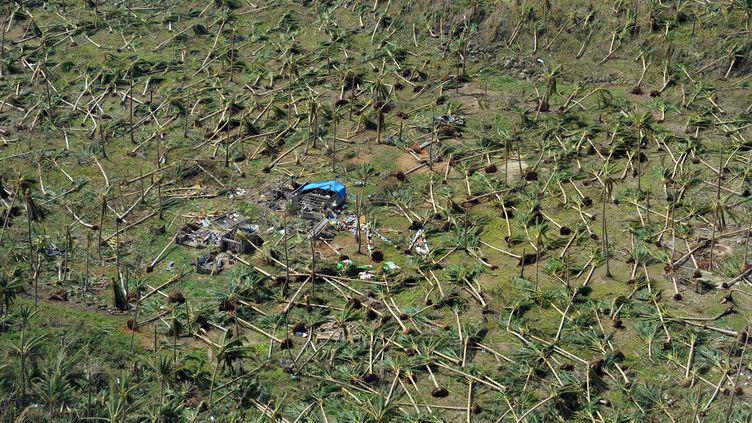 Des cocotiers déracinés par le typhon Haiyan, autour de la ville de Guiuan (Philippines), le 11 novembre 2013. (TED ALJIBE / AFP)
