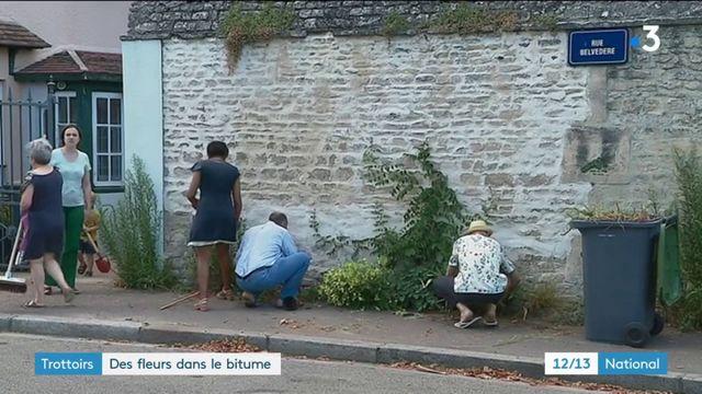 Trottoirs : à Caen, des fleurs dans le bitume