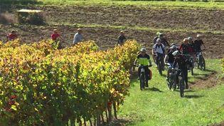 Tarn : le cyclotourisme séduit les touristes étrangers (FRANCE 3)