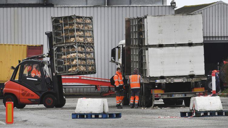 Des ouvriers déchargent des poulets à l'usine Doux, le 23 mars 2018, à Chateaulin (Finistère). (FRED TANNEAU / AFP)