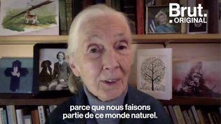 VIDEO. Comment les travaux de Jane Goodall ont-ils transformé notre perception des animaux ? (BRUT)