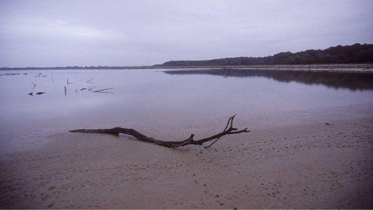 Le lac du Der, dans la Marne. (APESTEGUY/SIPA / SIPA USA)