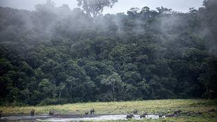 Dans le parc national d'Ivindo, dans le centre du Gabon (20 mai 2019). (AMAURY HAUCHARD / AFP)