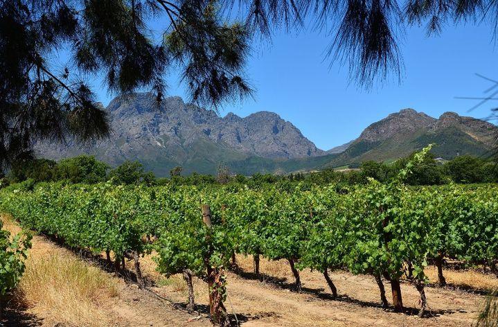 Vignoble à Franschhoek dans la province du Western Cape en Afrique du Sud. (PLANCHARD ERIC / HEMIS.FR / HEMIS.FR)