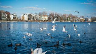 Des oiseaux photographiés dans le parcTreptower à Berlin (Allemagne) le 28 février 2015. (FELIX ZAHN / DPA / AFP)