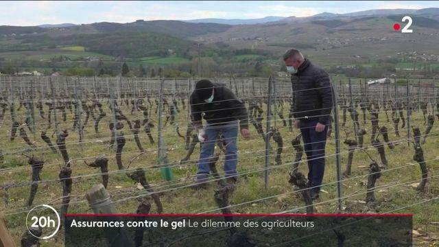 Gel : le dilemme des agriculteurs au sujet des assurances contre les risques climatiques