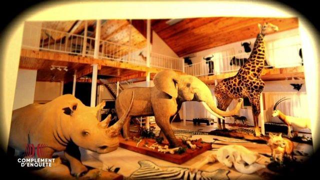 Complément d'enquête. Les liens contre nature du WWF avec l'industrie de la chasse au trophée