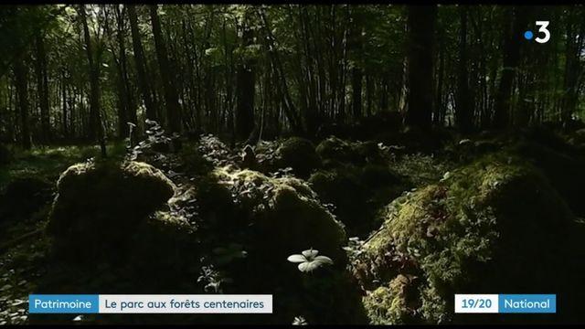 Environnement : création du parc national des forêts
