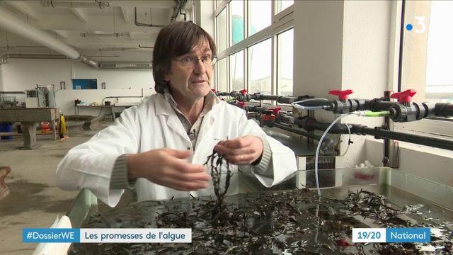 Environnement : les promesses de l'algue