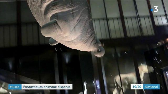 Muséum national d'histoire naturelle : des animaux disparus ressuscités par la 3D