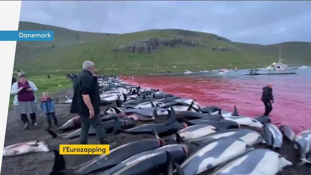 Euroapping : inflation en Grande-Bretagne, massacre des dauphins au Danemark