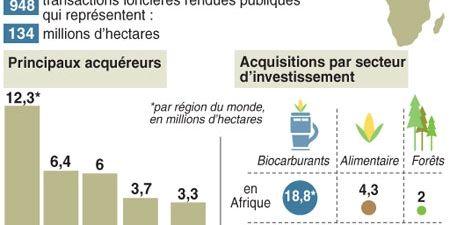 Acquisitions de terres agricoles en Afrique (AFP)