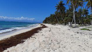 Une plage de Capesterre-de-Marie-Galante en Guadeloupe, le 21 mars 2019. (VINCENT PILLET / RADIOFRANCE)