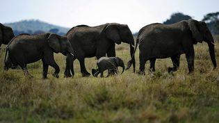 En Tanzanie, l'une des plus grandes réserves historiques a vu plus de 90% de ses éléphants disparaître depuis son classement à l'Unesco. (TONY KARUMBA / AFP)