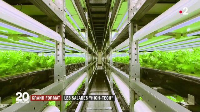 """Grand format : les salades """"high-tech"""" au Japon"""
