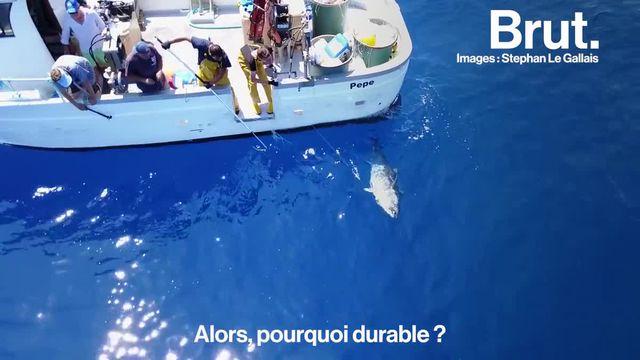 Pendant ce temps-là en Corse, Brut a suivi Sébastien, l'un des quatre derniers pêcheurs du port de Bastia...
