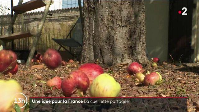 Une idée pour la France : les cueillettes solidaires contre le gaspillage