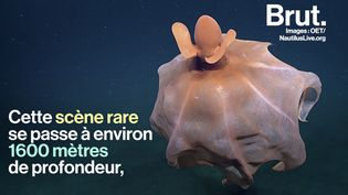 VIDEO. Cet octopus a une technique originale pour tromper ses prédateurs (BRUT)