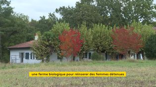 Une ferme bio à Tarnos dans les Landes pour la réinsertion de détenues (France 3 Aquitaine)