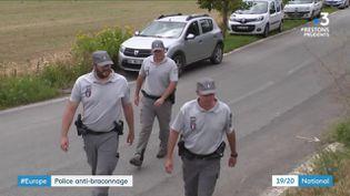 L'agence européenne de l'environnement tire la sonnette d'alarme : en France, la population de chardonneret, espèce d'oiseaux rare, a chuté de 50% en dix ans. (France 3)