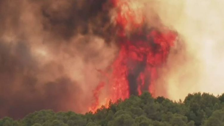 Incendie de l'Aude : 300 hectares sont partis en fumée (FRANCE 2)