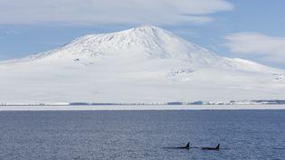 La mer de Ross, en Antarctique, où a été découverte une fuite de méthane, selon une étude scientifique publiée le 22 juillet 2020. (SAMUEL BLANC / BIOSPHOTO / AFP)