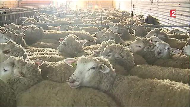 Ardèche : une coopérative redonne vie au secteur de la laine