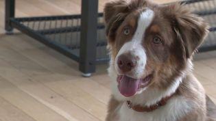 Confinement : boom des adoptions de chiens, les associations mettent en garde contre l'abandon (France 2)