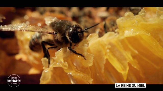 """VIDEO. """"Quand on élève des abeilles, on contribue à travailler dans l'intérêt général, au service de l'humanité"""" : une apicultrice lanceuse d'alerte"""