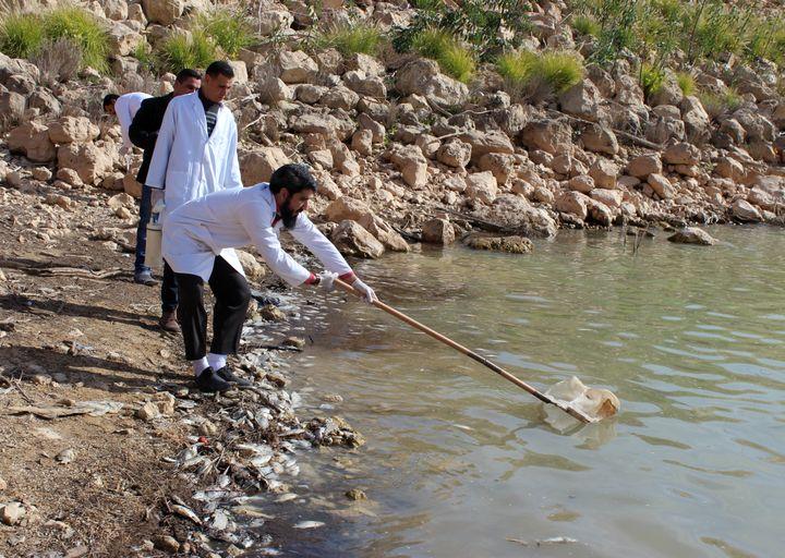 Pêche aux poissons morts par les scientifiques, pour procéder à leur dissection. Lac de Wadi Kaam, le 2 février 2019. (AYMAN AL-SAHILI / REUTERS)