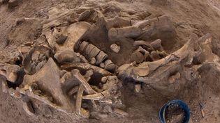 L'archéologie préventive et ses trouvailles : un squelette de mammouth complet, en excellent état, a été découvert à Changis-sur-Marne dans le cadre de fouilles de l'Inrap (6 novembre 2012)  (Loïc Venance / AFP)