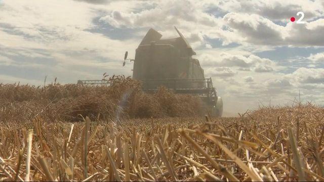 Agriculture : Les cours des céréales s'envolent depuis 2020