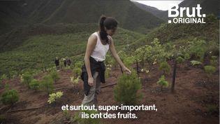 VIDEO. En Nouvelle-Calédonie, le WWF œuvre pour protéger la flore exceptionnelle de l'archipel (BRUT)
