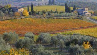 Les vignobles en Toscane (Italie) ont pris une teinte automnale #poésie, le 2 novembre 2011. (FABIO MUZZI / AFP)