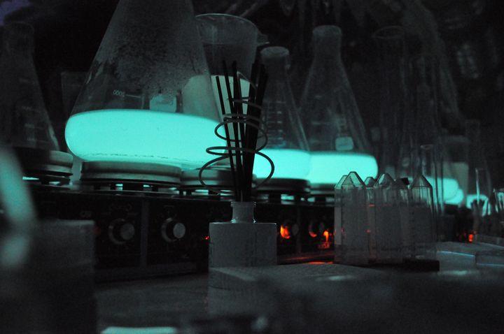 Les bactéries bioluminescentes cultivées en laboratoire par Glowee. (GLOWEE)