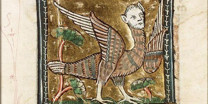 Stryge ou Harpie, enluminure du XVIIe siècle  (DR)