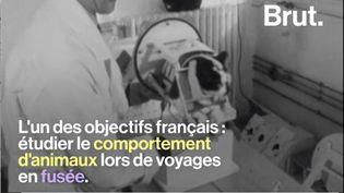 Félicette est une des pionnières de l'exploration spatiale. La chatte française a dû mener un entraînement de longue haleine pour quitter la planète bleue. (BRUT)