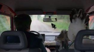 """Mercredi 12 juin sort en salles """"Roxane"""", une comédie rurale sensible. L'histoire d'un combat pour continuer à exister, salué par la critique. (FRANCE 3)"""