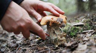 Un cueilleur de champignons à l'oeuvre. (DPA-PICTURE-ALLIANCE/AFP)