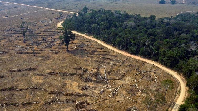 Une parcelle déforestée de la forêt amazonienne, le 24 août 2019 près de Porto Velho (Brésil). (CARLOS FABAL / AFP)