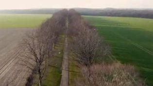 Les Français sont de plus en plus nombreux à se mobiliser pour leurs arbres. Les pétitions pour tenter d'empêcher les arrachages se multiplient à la ville, comme à la campagne. (FRANCE 2)