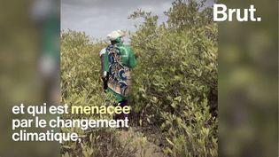 VIDEO. Produire du miel pour lutter contre la déforestation ? (BRUT)