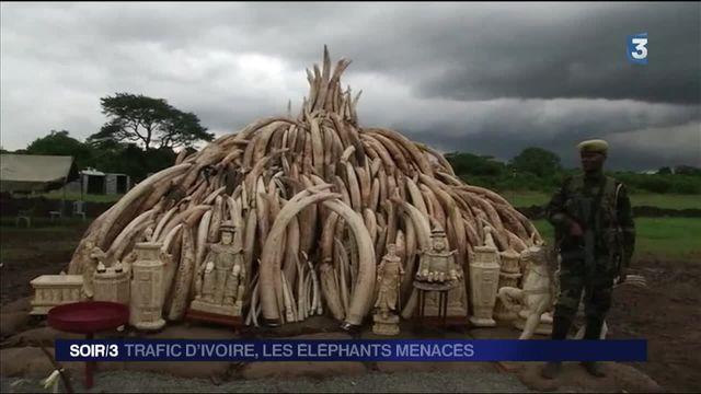 Les éléphants menacés par le trafic d'ivoire en Afrique