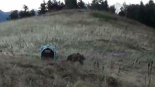 Une photo de l'Office national de la chasse et de la faune sauvage montre une femelle slovène relâchée dans les Pyrénées, le 5 octobre 2018. (L'OFFICE NATIONAL DE LA CHASSE / AFP)