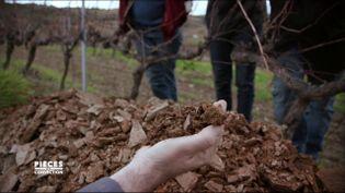 """""""Le sol a changé !"""" La vigne avant et après l'abandon des pesticides (CAPTURE D'ÉCRAN """"PIÈCES A CONVICTION"""" / FRANCE 3)"""