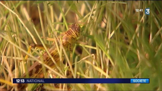 Manger des insectes : une nouvelle habitude alimentaire ?