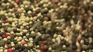 Penja, au Cameroun, est devenue la capitale mondiale du poivre en quelques années. Des Français y viennent pour acheter des grains avant de les revendre en France. (France 2)
