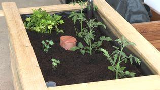 bac potager autofertile pour les jardiniers débutants (France Télévisions / France 3 Aquitaine)