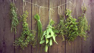 Plantes aromatiques auséchage. (EKATERINABORNER ROOM RF / FOTOLIA)
