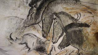 Quatre chevaux et un rhinocéros: voici une des peintures les plus célèbres de la grotte de Chauvet (Ardèche). (STEPHANE MARC / LE DAUPHINE / MAXPPP)